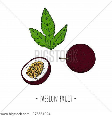 Passion Fruit. Vector Cartoon Illustrations. Isolated Objects.