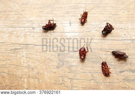 Dead Cockroaches On Floor. Concept The Problem In The House Because Of Cockroaches Living In The Kit
