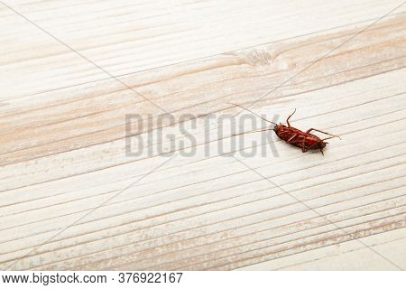 Dead Cockroach On Floor. Concept The Problem In The House Because Of Cockroaches Living In The Kitch