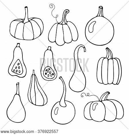 Happy Thanksgiving . Harvest Season. Hand Drawn Vector Set Of Various Pumpkins. Linear Illustration.