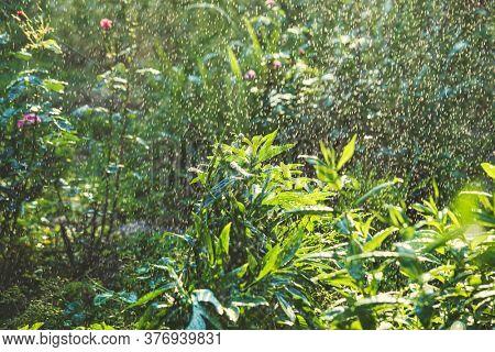 Summer garden watering by irrigation system