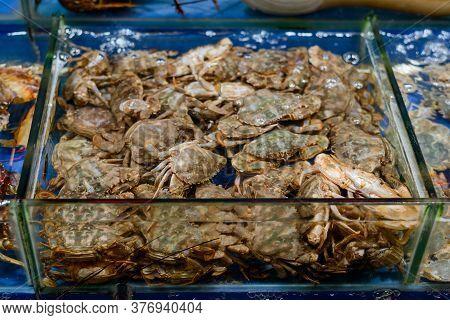 Batch Of Meaty Crabs In Aquarium. Fresh Seafood