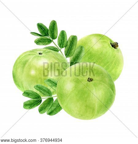 Closeup Indian Gooseberry Fruits Amla With Leaf Watercolor Illustration Isolated On White Background