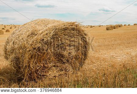 Close-up Of A Huge Bale Of Hay On The Background Of Harvested Field With Many Straw Bales