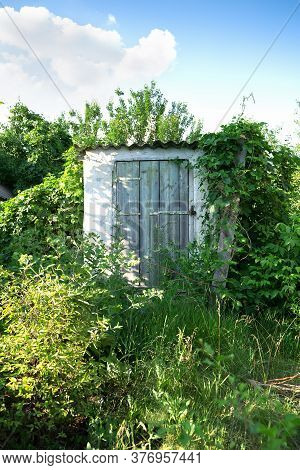 The Door To The Basement-cellar On The Farm Entwined With Vines And Juicy Greenery