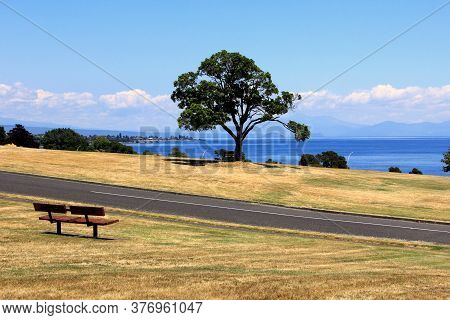 Magnificent New Zealand Landscape At Tauranga. View From The Hill To The Lake. Bench And Lonely Tree