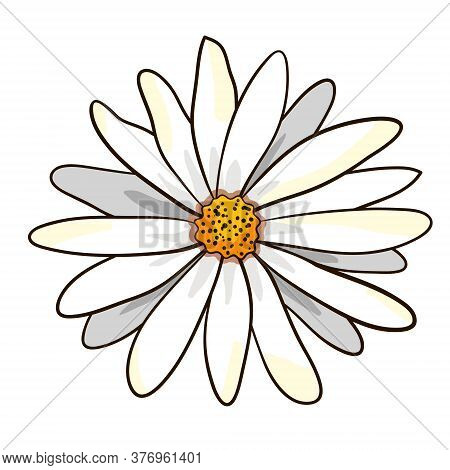 Vector Chamomile Daisy Flower Isolated On White