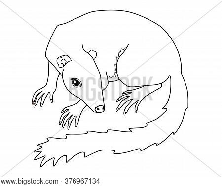 Treeshrew. Tupaia - Small Asian Animal - Vector Linear Picture For Coloring. Small Tree Shrews Is A