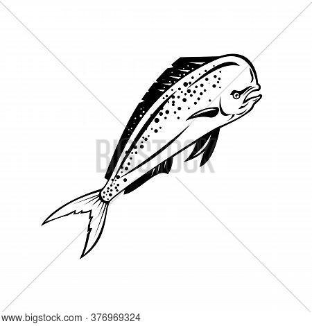 Retro Style Illustration Of A Mahi-mahi, Dorado Or Common Dolphinfish(coryphaena Hippurus), A Surfac