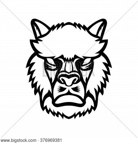 Mascot Black And White Illustration Of Head Of An Angry Alpaca (vicugna Pacos) Or Llama, A Domestica