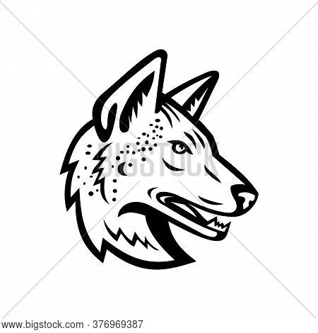 Black And White Mascot Illustration Of Head Of An Arabian Wolf Or Canis Lupus Arabs, A Subspecies Of