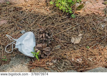 Discarded Medical Mask On Dry Pine Needles..