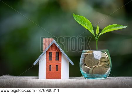 House Placed On Coins. The Tree Grows On Coins.  Planning Savings Money Of Coins To Buy A Home Conce