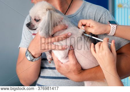 Dog Get Vaccinated Against By Veterinarian Doctor