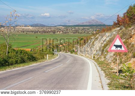 Sharp Turn Of The Road With A Warning Road Sign, Cattle-related. Dinaric Alps, Bosnia And Herzegovin