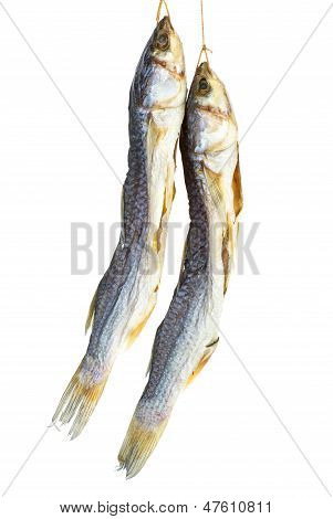 Fresh fish mullet isolated
