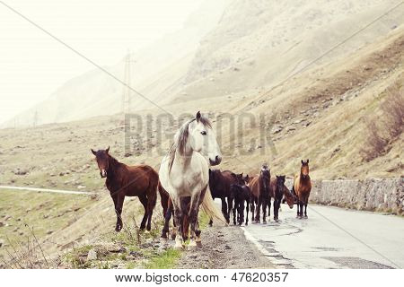 Horses On A Road