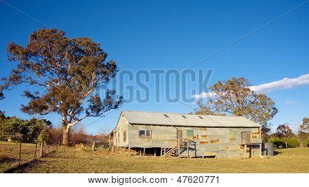 Shearing Sheep In Rural Australia