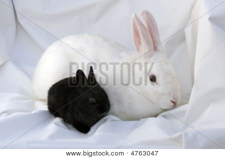 Mother And Baby Bunny