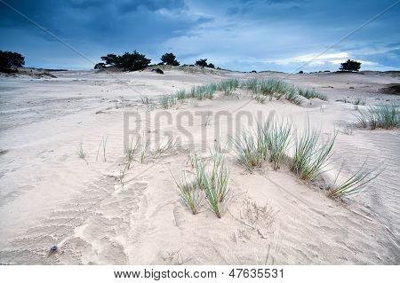 Sand Texture On Dunes By Appelscha