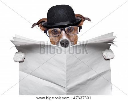 British dog reading a big blank newspaper poster