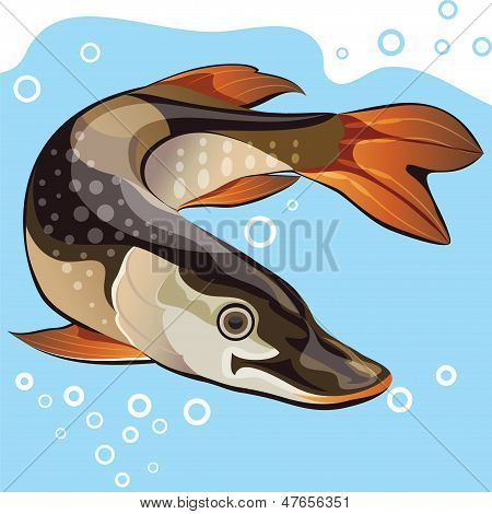 Fish, Vector Illustration