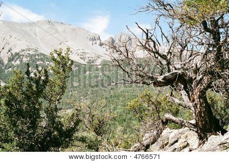 Wheeler Peak Nevada
