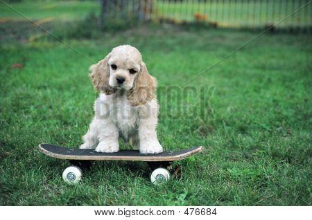 Acs Skateboarder