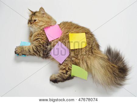 posit with cat