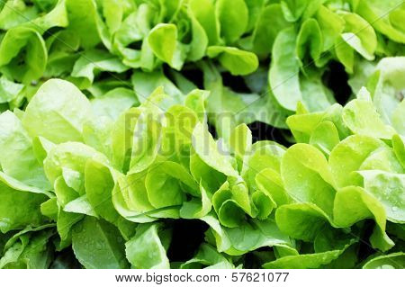 Fresh Raw Salad