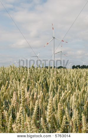 wind engines with cornfield