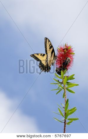Butterfly And Bees