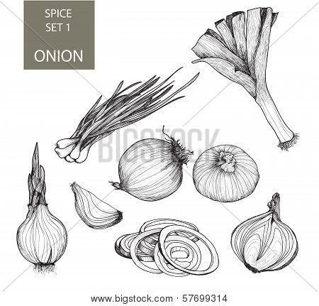 Onion. Set of illustrations