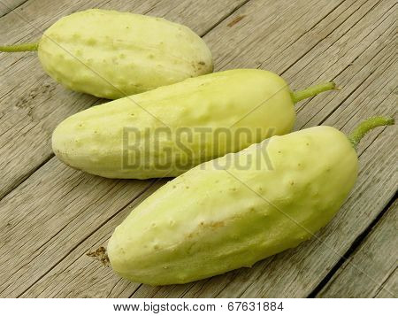 fresh harvested white cucumbers