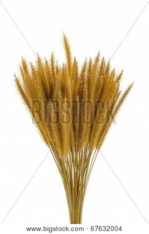 Dried Bayley Rice On White Background