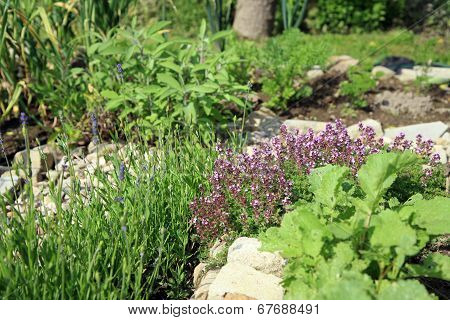 Intercropping ecological herbal garden.