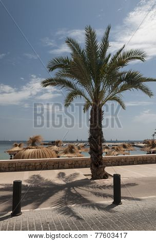 Palm Tree By Biking Route At Cala Estancia