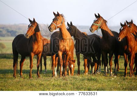 Horses On A Summer Pasture When The Sun Goes Down