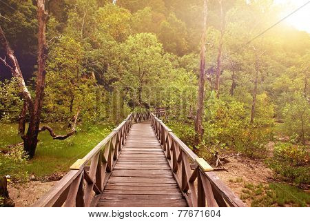 Wooden boardwalk in a tropical swampland heading into a forest of Sarawak