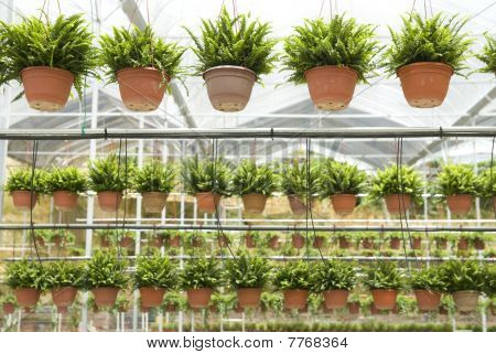 Agriculture Nusery Farm, With Pots Hanging