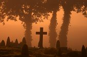 In a cemetary  in denmark an automn day  in the the early morning fog with a warm orange sun poster