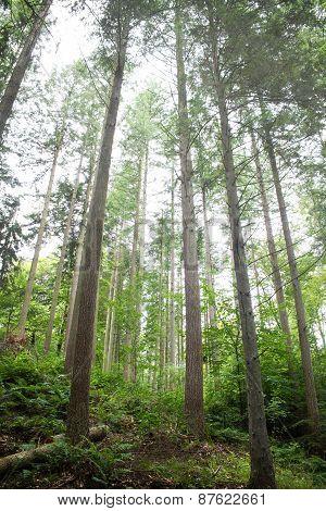 Forest 03 Fog