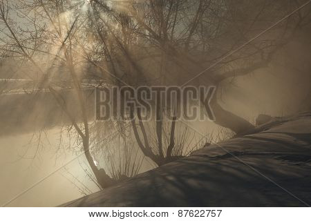 Frost on the trees on the embankment of the Iset River in Yekaterinburg, Russia. poster