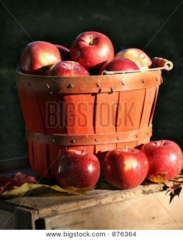 Applesempire