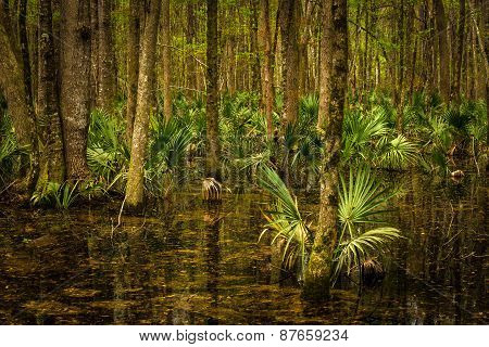 South Carolina Flooded Palmetto Forest