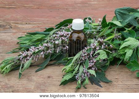 Herbal Medicine: Grass And Tincture Of Motherwort