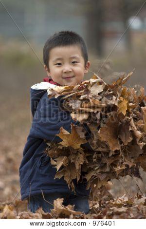 Armful Leaves