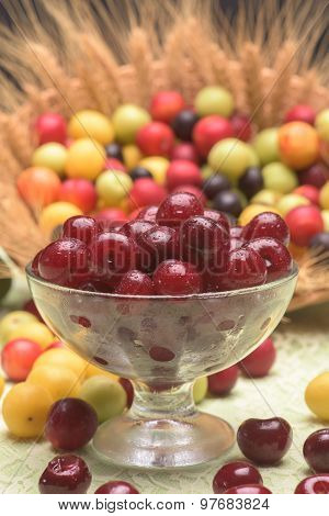 Sour Cherry And Cherry Plums