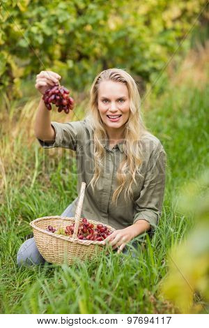 Portrait of a sitting blonde winegrower handing a red grape