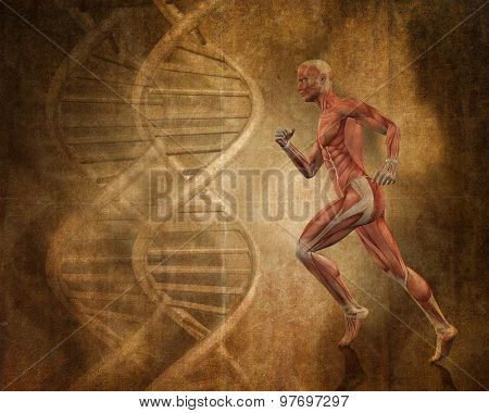 Grunge style background with 3D running man with muscle map and DNA strands poster